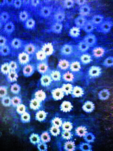 アクリル画 植物画 花の絵 絵画 美術 アート