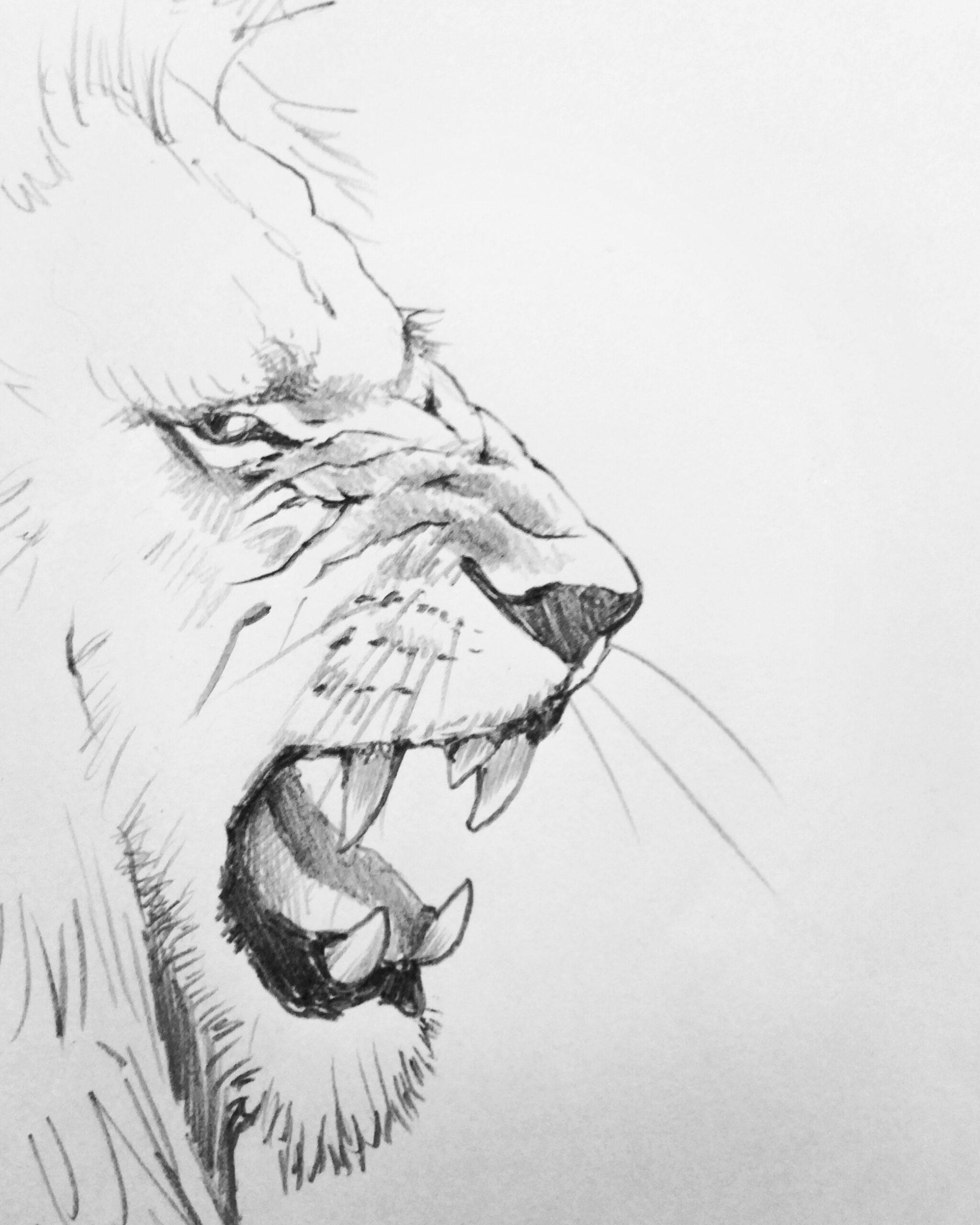 鉛筆画 動物画 デッサン 習作 絵画 絵 美術 アート