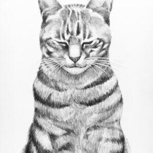鉛筆画 動物画 デッサン アート 猫 猫の絵