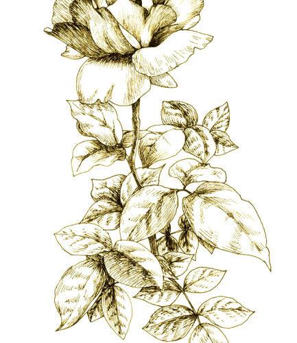 デッサン イラスト 植物画 薔薇 バラ アート 美術